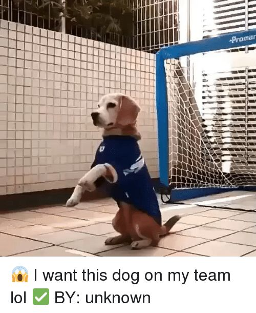 Dogs Funny and Lol Prompr 😱 I want this dog on my team