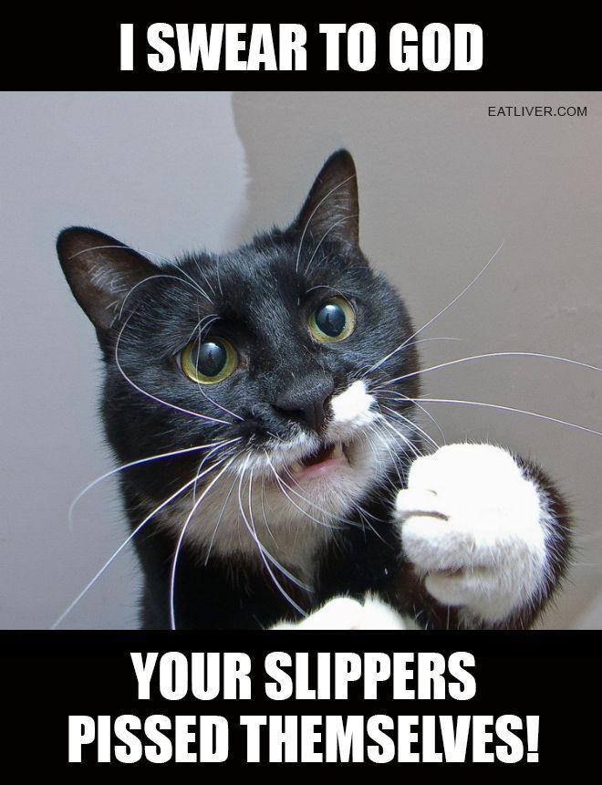 cat pissed slippers