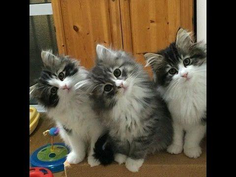 Funny Kitty Cat Videos