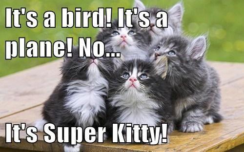 super kitty kitten cute