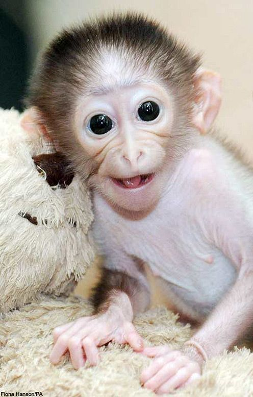 List Different Types of Monkeys Facts and Information Monkey Smiling Cute Baby Monkey Cute