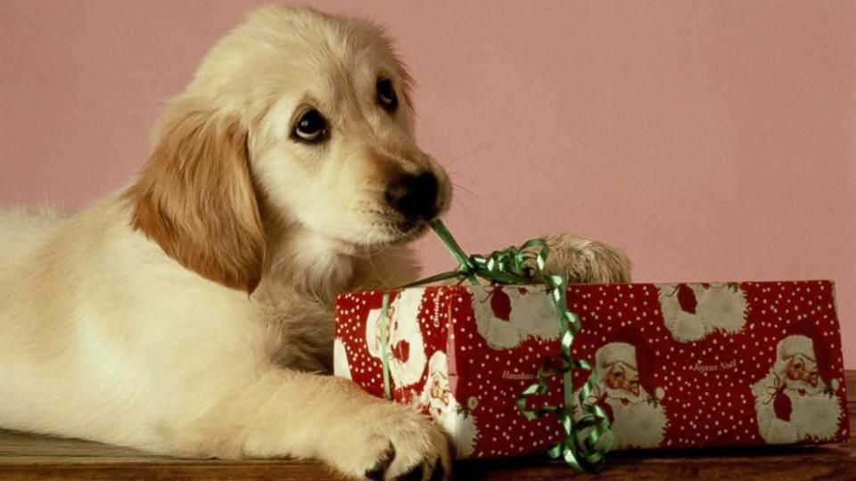 Cute Pets Unwrapping Presents Go Viral After Christmas