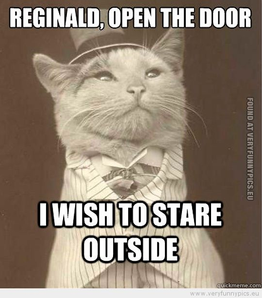 Funny Picture Aristocat Reginald open the door i wish to stare outside