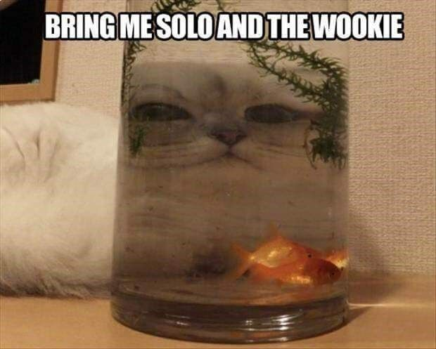 star wars caption Cats