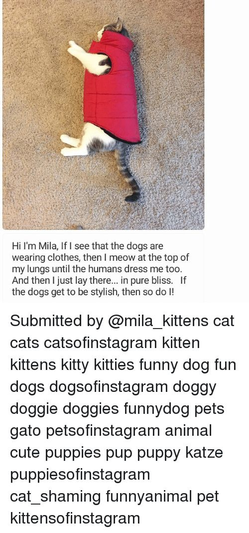 Grab the Incredible Funny Cat Pictures Wearing Clothes