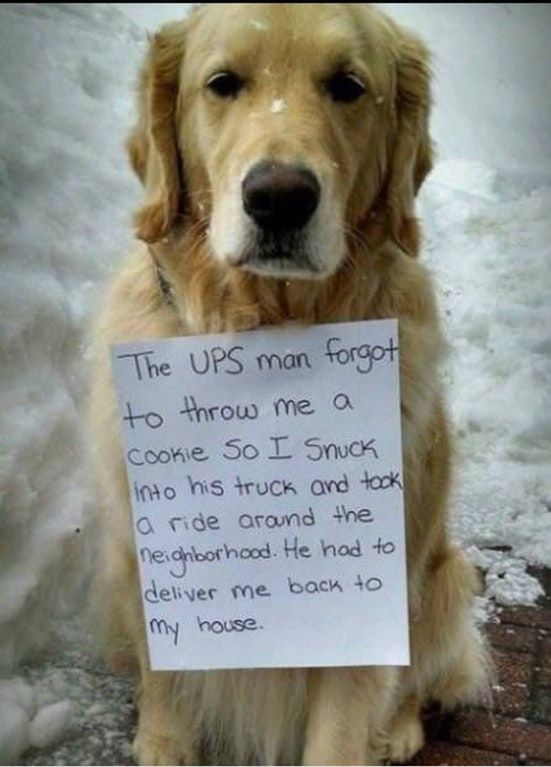UPS dog delivery aww