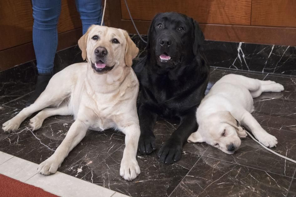 German shorthaired pointer nips at heels of top dog breeds Georgia News