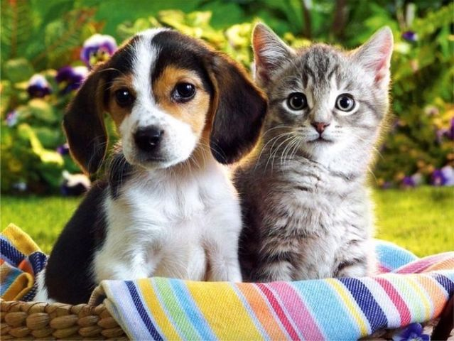 Why Women Are Like Cats And Men Are Like Dogs