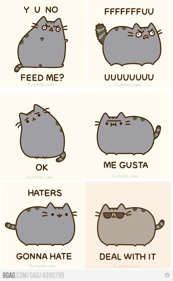 Cat meme faces Internet level 9000