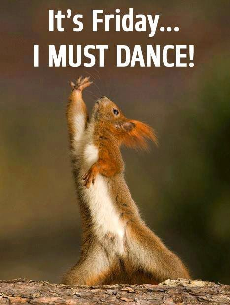 Google Squirrels Funny Squirrel Red Squirrel Funny Kitties Chipmunks Night Fever