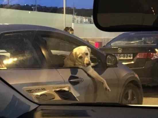 Dog Car Car door Luxury vehicle pact car Window Motor