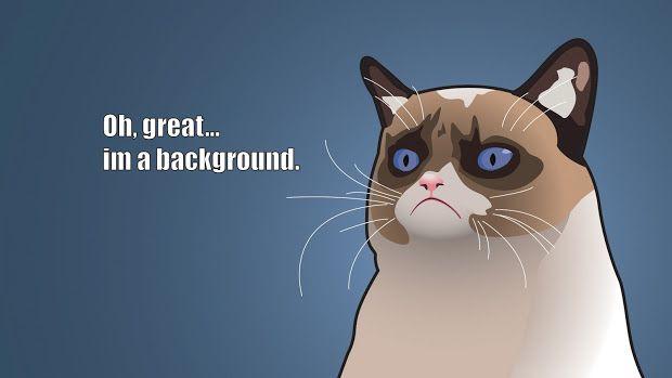 Grumpy Cat Memes Funny