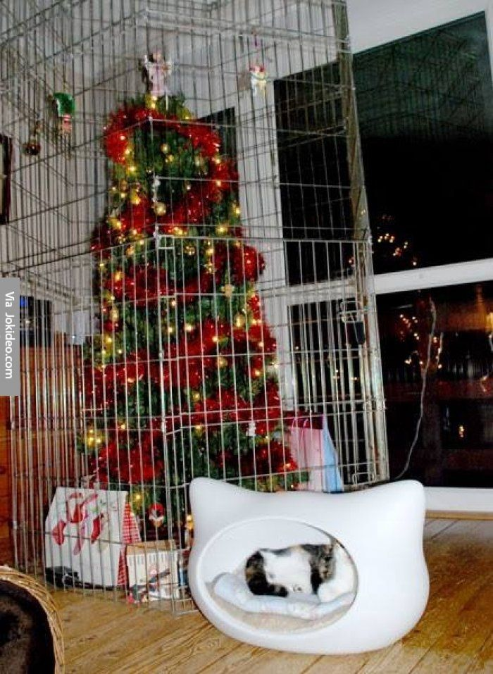Christmas tree in a house with cats