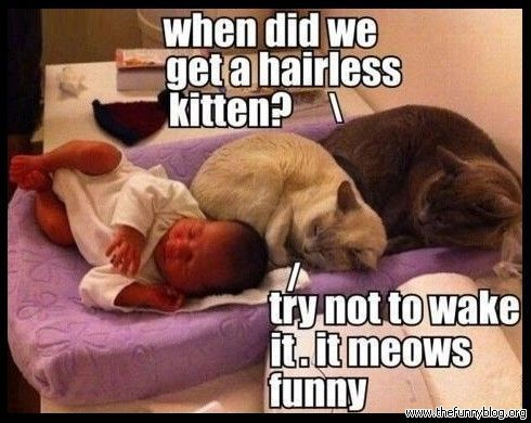 funny cat memes Google Search