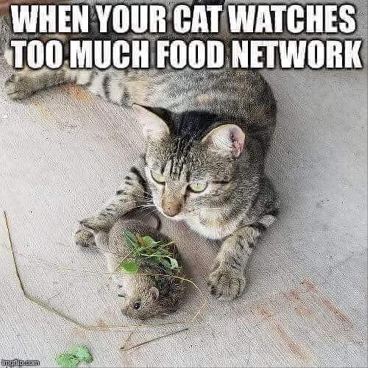 1 The cat that watches too much food network