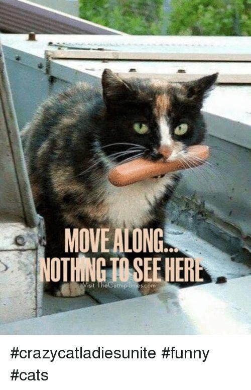 Memes Time and 🤖 MOVE ALONG sit The Catnip times crazycatla sunite crazycatla sunite funny cats