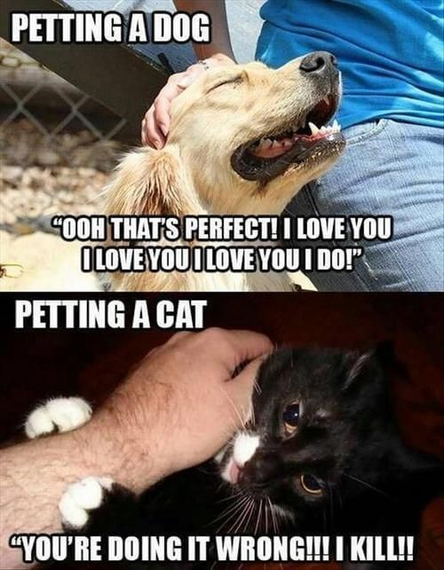 dog and cat memes 21