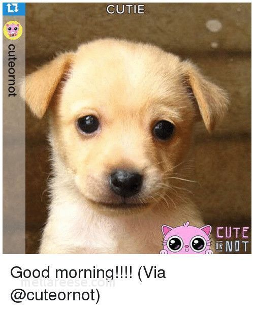 Grab the Lovely Funny Dog Pictures with Wuotes