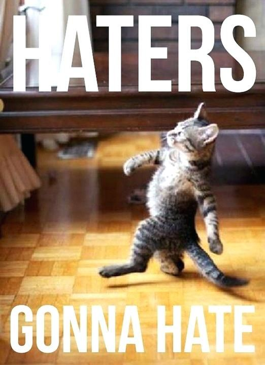 Funny Quotes About Cats Dogs