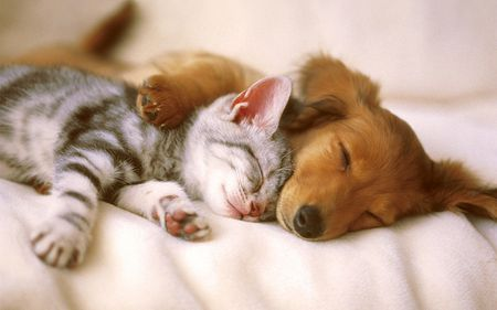 A kitten and puppy taking a nap to her