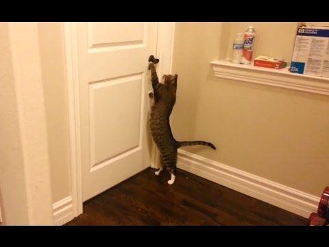 """Clever Cats Opening Doors pilation"" CFS"