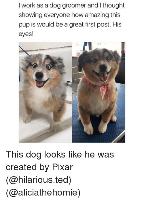 Funny Pixar and Ted I work as a dog groomer and I thought
