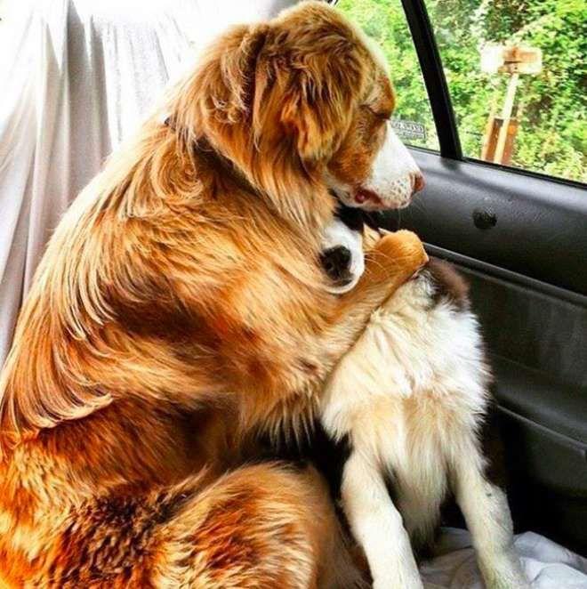 10 photos amusantes et attendrissantes de chiens qui affichent leur amitié au grand jour
