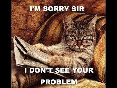 Funny Cat Memes Funny Cat Memes For Kids