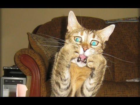 Funniest Scared Cat Video pilation
