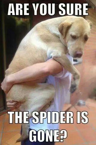 Image result for clean dog memes