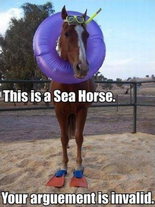 haha Seahorses Funny Animals With Captions Cute Captions Funny s With Captions