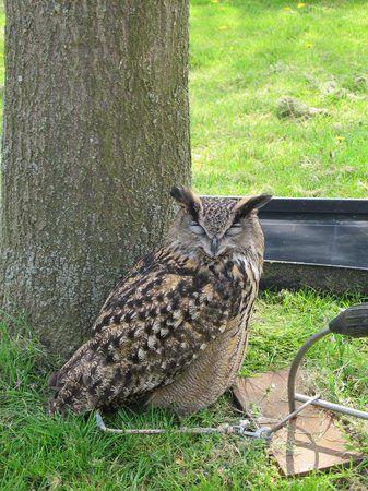 Old MacDonald s Farm Hello Owl