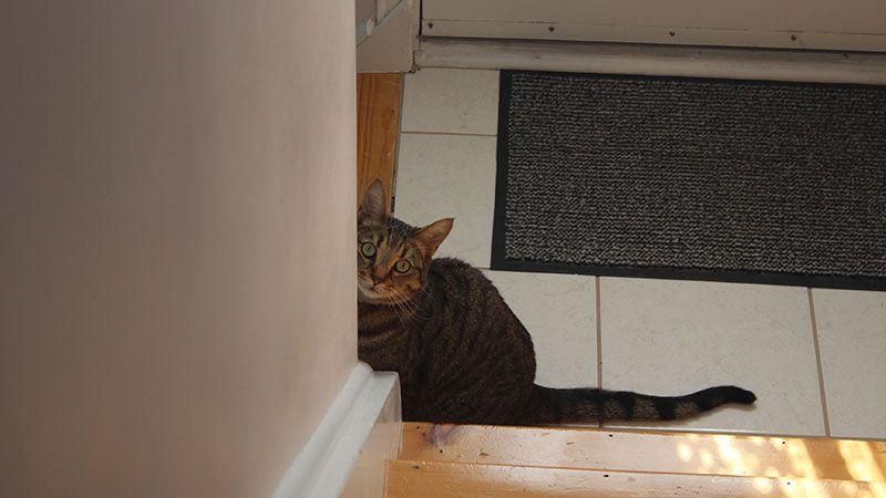 walker sitting sunlight cute peering cat eyes