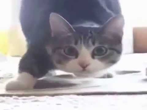 Cat Wiggle Wiggle Wiggle [FULL SONG VIDEO]