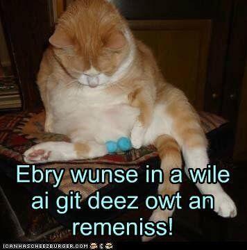 "Funny Pet s on Twitter "" funny cat neutered reminisce meme"