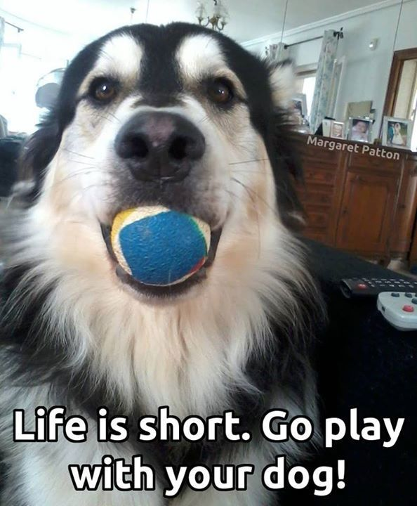 Letting the dog out does not equal play time Find out why I Love