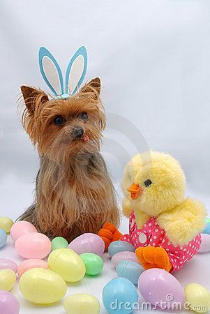 Easter Yorkie and friend