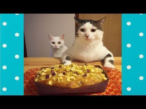 Funny Animal Videos Funny Videos Funny Animals Cute Animals Baby Animals