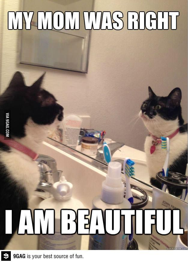 Self Help Cat is beautiful