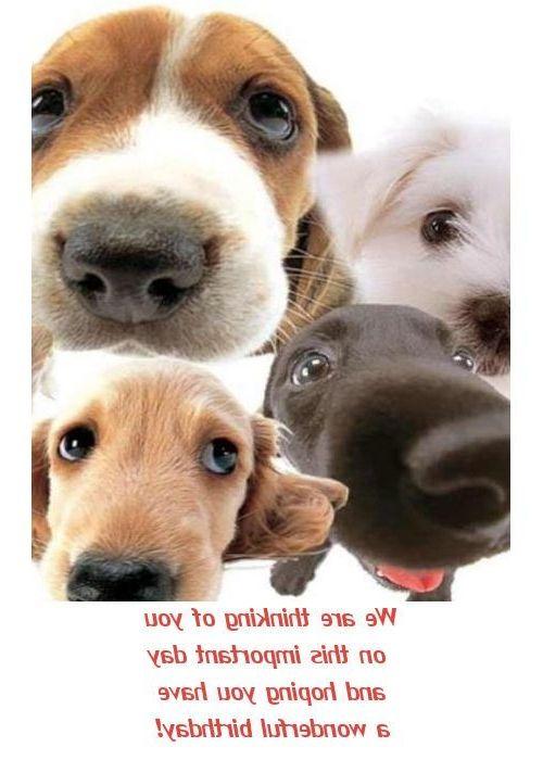 Funny Dog Birthday Cards Drdp Dog Birthday Cards Happy Birthday Card with Dogs