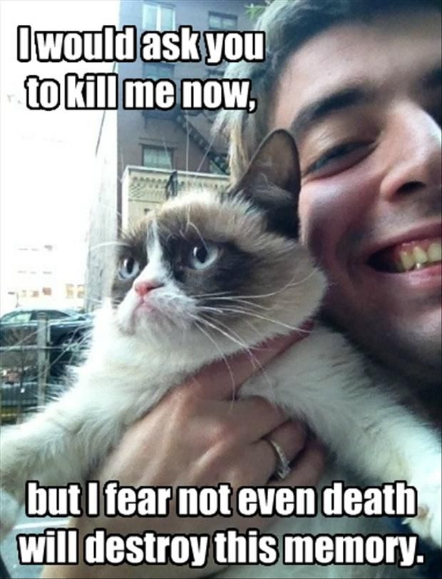 Funny Grumpy Cat Meme I Would Ask You To Kill Me Now But I Fear Not