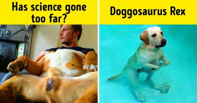 Grab the New Dog Memes Funny Barking