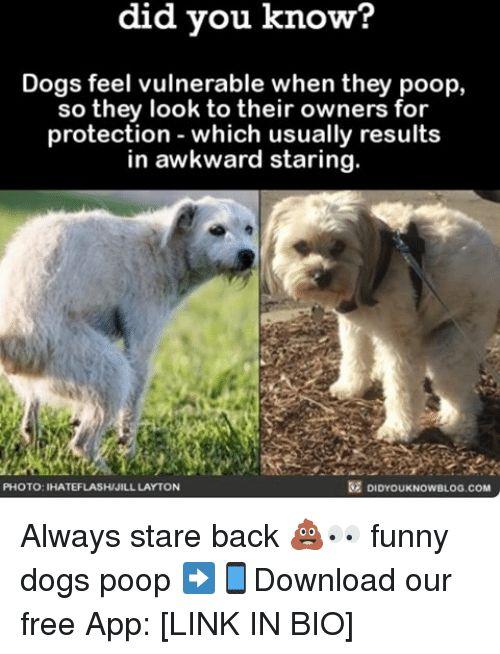 Funny Poop Memes of 2017 on SIZZLE of Poop