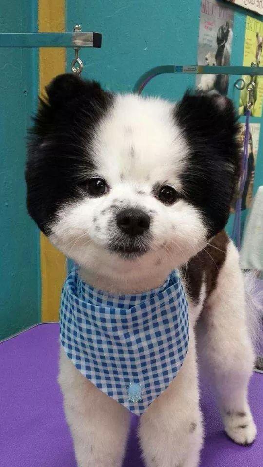 Schnauzers Pet Dogs Dog Cat Doggies Pugs Cute