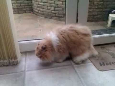 FUNNY video of Cat being Sick Better out than in