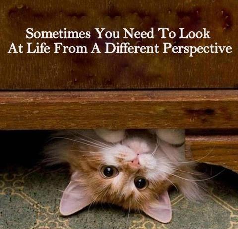 cat funny joke