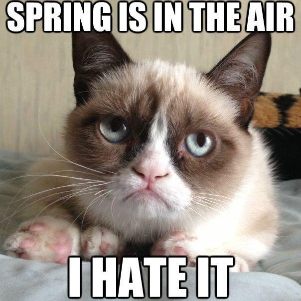 Grumpy Cat spring meme