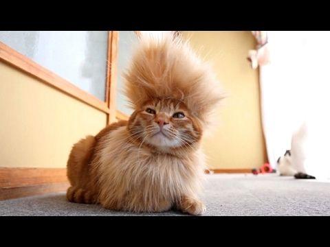 cat cats kitten