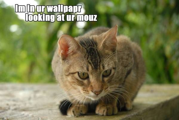 Funny Cat Backgrounds with Quotes