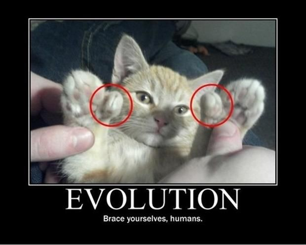 4 funny cat pictures with captions 4